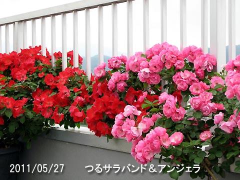IMG_8440.jpg