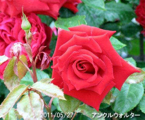 IMG_8458.jpg